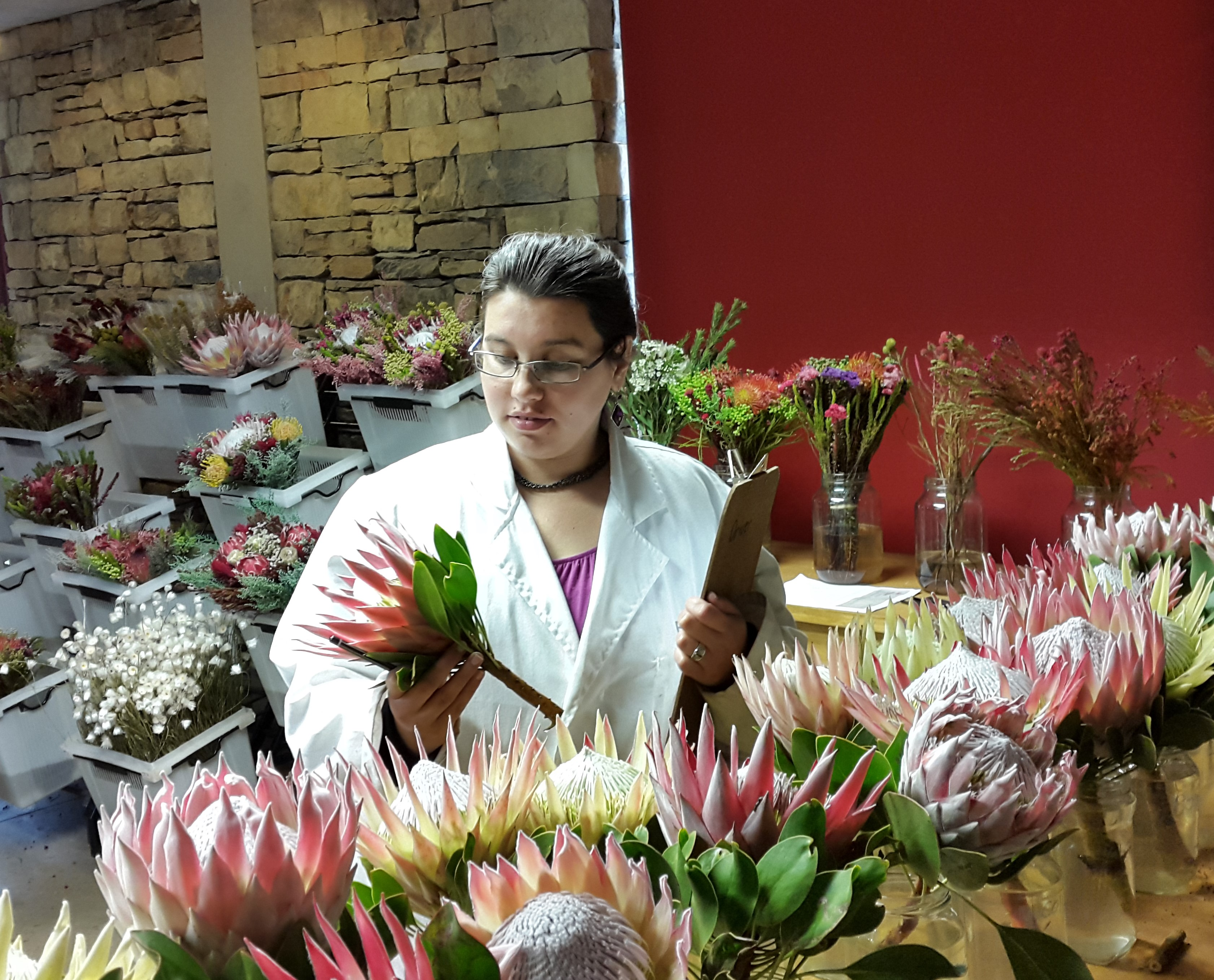 Proteas turn blotchy when they have sugar cravings in the mornings » SciBraai
