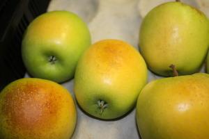 Apples that have suffered sunburn damage. Photo: Elmi Lotze