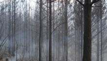Jonkershoek near Stellenbosch, after the March 2015 fires. Photo: Martina Meincken